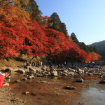 "Popular fall foliage spots! Make the Tomoe River Valley's ""komakado kazaana cave.、4,000In the book also leaves this year is a stunning Red"