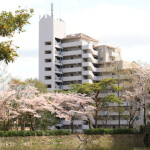 Cherry blossoms in full bloom! Next to 四tsu池 Park Green apartments full of ' Park 四tsu池 '
