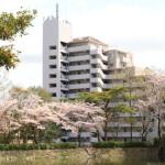 桜満開!四ツ池公園に隣接し緑溢れる賃貸マンション「パークビュー四ツ池」