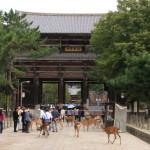 華厳宗大本山「東大寺」大仏殿にて奈良の大仏様を拝観しながら鹿と戯れよう
