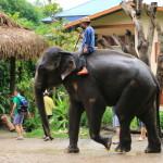「メーサ・エレファント・キャンプ」貴重な体験!大興奮の象乗りにバンブーラフティング