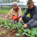 "Into an organic farm of natural farming that produce organic vegetables to provide the ""Gloria Hotel Group""!"