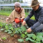 「グロリアホテルグループ」で提供するオーガニック野菜をつくり出す自然農法の有機農園へ!