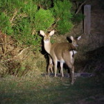 "Resort hotels in Kenting ""Gloria Manor"" Go to Night Deer !"