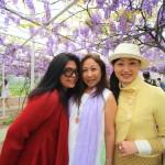 """""""紫藤咖啡園"""" 照片會議盛開美麗的紫藤隧道在台灣淡水區"""